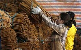 Tạo động lực phát triển kinh tế từ các sản phẩm OCOP