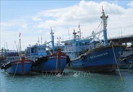 Đầu tư nâng cao hiệu quả khai thác hải sản xa bờ