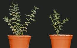 Phát hiện thực vật hấp thụ dưỡng chất từ bụi trong không khí
