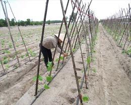 Đổi mới sáng tạo 'mở đường' cho những thành tựu trong nông nghiệp