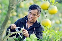 Thực hiện hiệu quả chuyển đổi cơ cấu cây trồng, vật nuôi