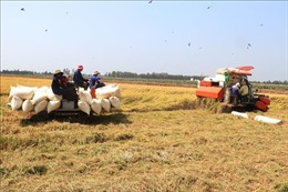 Hoàn thiện chuỗi giá trị nông sản