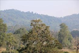Ứng dụng công nghệ ảnh vệ tinh phục vụ bảo vệ rừng