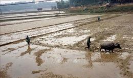 Người dân vùng lũ khôi phục sản xuất để đón Tết