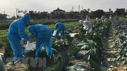 Hải Dương hỗ trợ hơn 30 tấn rau, củ cho các khu bị phong tỏa, cách ly