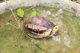 Vườn Quốc gia Cúc Phương chú trọng bảo tồn, cứu hộ rùa