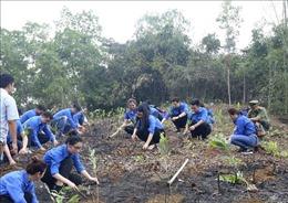 Tuổi trẻ Thông tấn xã Việt Nam trao tặng 10.000 cây xanh tại Hòa Bình