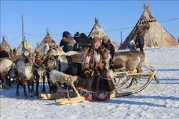 Lễ hội tôn vinh người chăn hươu đầy màu sắc tại LB Nga