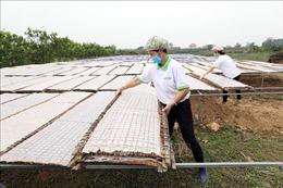 Đưa nông sản Việt đến thị trường thế giới - Bài 3: Mỳ chũ Thuận Hương- không chỉ là món quà quê lên phố