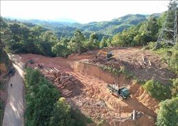 Vụ phá rừng trên đèo Pha Đin: Tạm đình chỉ Hạt trưởng hạt Kiểm lâm huyện Tuần Giáo