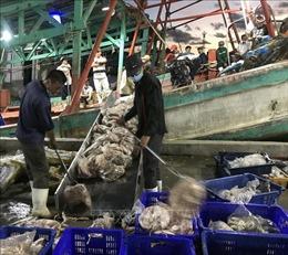Nhiều doanh nghiệp chế biến thủy sản ở Kiên Giang phải tạmngừng hoạt động