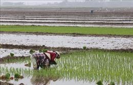 Hơn 3.000 ha sản xuất nông nghiệp tại Hà Nội có đủ nước làm đất