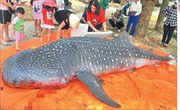 Giết hại động vật hoang dã vì thiểu hiểu biết