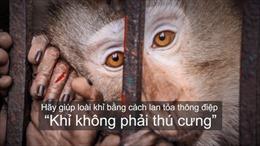 """Ra mắt phim truyền thông """"Khỉ không phải thú cưng"""""""