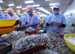 Xuất khẩu tôm dự kiến đạt 3,6 tỷ USD trong năm 2020