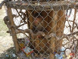 Hoàn thiện khung pháp luật về bảo vệ động vật hoang dã