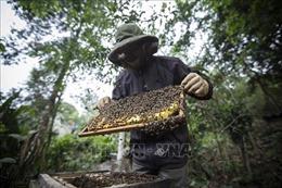 Sinh kế hàng chục nghìn người bị thiệt hại nếu mật ong Việt Nam bị Mỹ áp thuế chống phá giá