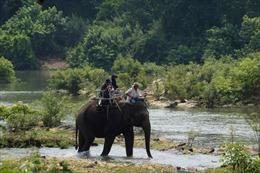 Ngày voi thế giới 12/8: Gắn kết toàn thế giới để cứu voi