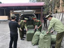 Thu giữ 600 kg nầm lợn bốc mùi hôi thối có nguồn gốc từ Trung Quốc