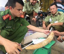 Phát hiện gần 20 kg ngà voi vận chuyển trái phép tại Bình Định
