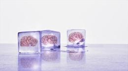 Đông lạnh não để hồi sinh sau hàng trăm năm