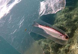 Bức ảnh minh chứng cho nỗi thống khổ của sinh vật biển vì rác nhựa