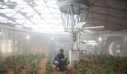 Trung Quốc tham vọng trồng hoa trên Mặt Trăng
