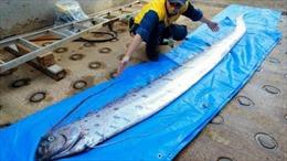 Xác cá 'rồng biển' khiến người dân Nhật Bản lo lắng
