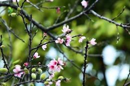 Xuân về, trải nghiệm vùng văn hóa người Dao ở Huổi Só