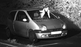 Lái xe vi phạm luật giao thông thoát án phạt hi hữu