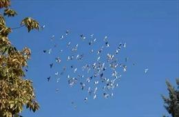 Vật thể lạ Hàn Quốc cử chiến đấu cơ ngăn chặn thực chất là một đàn chim