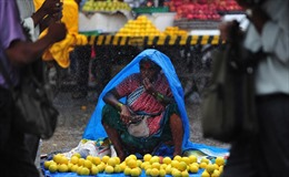 Ấn Độ đặt hy vọng vào mùa mưa để phát triển kinh tế