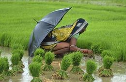 Chấn động hàng loạt nữ nông dân Ấn Độ triệt sản ở độ tuổi 20