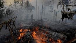 Thế giới tuần qua: Lửa vẫn cháy ngút rừng Amazon, thương chiến Mỹ-Trung có diễn biến mới