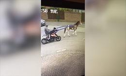 Dùng ngựa để cướp xe máy tại Anh