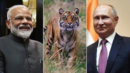 Loài động vật gắn kết Thủ tướng Ấn Độ và Tổng thống Nga