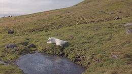 Vẻ đẹp choáng ngợp trên hòn đảo Bắc Cực qua video do Quân đội Nga công bố