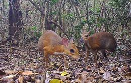 Phát hiện động vật tưởng tuyệt chủng ở Việt Nam sau 30 năm