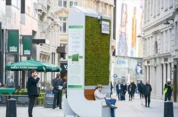 'Rừng nhỏ' bằng rêu lọc không khí tại Anh