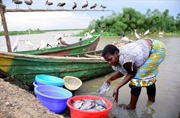 COVID-19 tình cờ đem lại lợi thế cho ngư dân Kenya