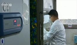 Viện Virus học Vũ Hán nghiên cứu virus Corona lạ trên dơi từ năm 2018