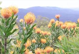 Khám phá vườn thực vật bản địa ở Australia