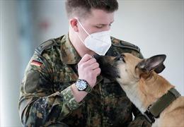 Đức huấn luyện chó đánh hơi chính xác 94% ca mắc COVID-19