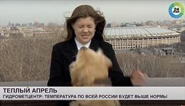 Video chó 'cướp' micro của phóng viên giữa sóng truyền hình trực tiếp