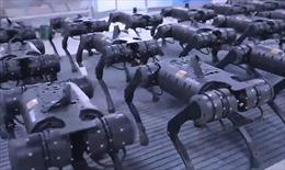 Video dàn robot Trung Quốc khiến cộng đồng mạng xôn xao