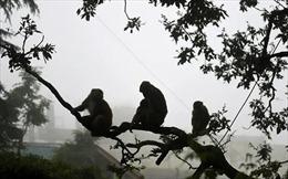 Ấn Độ bắt băng nhóm dùng khỉ để trộm đồ