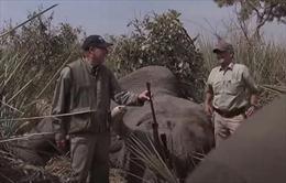 Video lãnh đạo Hiệp hội súng trường Mỹ săn voi hiếm gây phẫn nộ