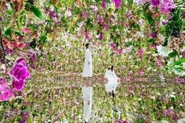 Bồng bềnh trong vườn lan nổi tại Nhật Bản