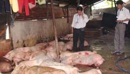 Gỡ vướng trong quản lý và sắp xếp giết mổ gia súc, gia cầm ở Đồng Nai