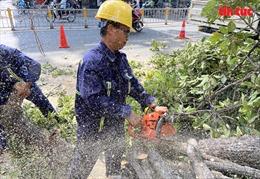 TP Hồ Chí Minh cắt tỉa, đốn hạ cây xanh có nguy cơ gãy, đổ đề phòng mùa mưa